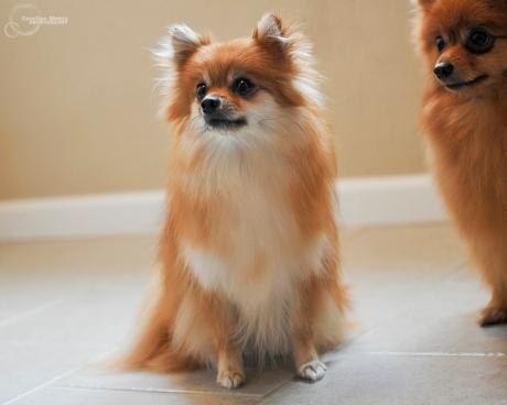 carney_dogs_01