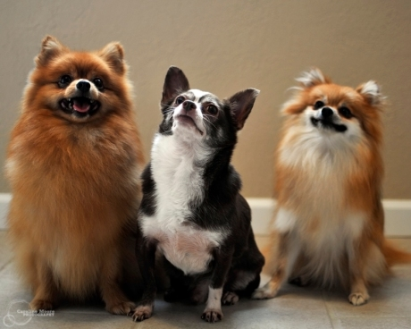 carney_dogs_28