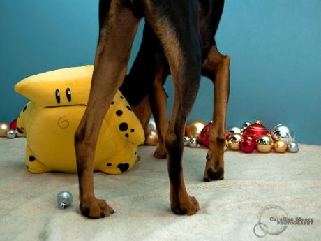 dog_holidaycards